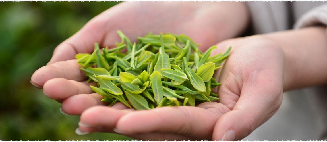 فروش چای ممتاز ایرانی