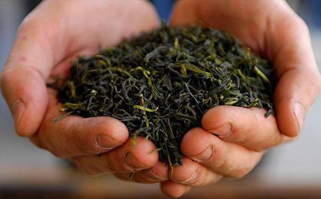 مراحل ایجاد چای خشک ایرانی