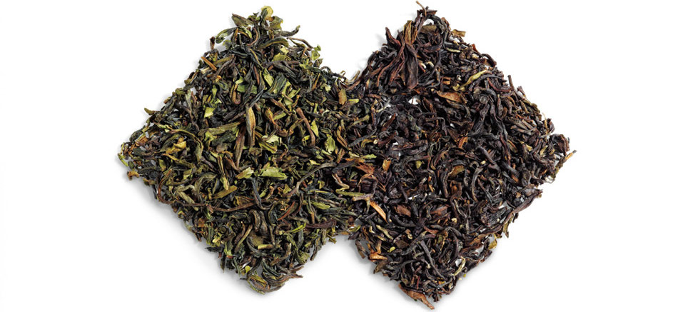 مراحل تولید چای شمال