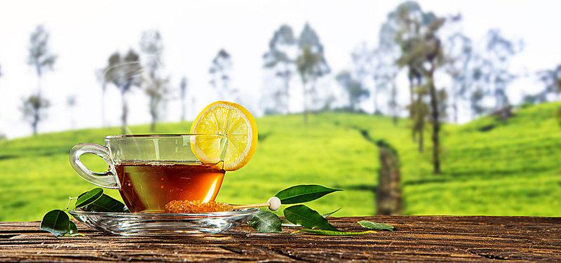 قیمت فروش چای قلم ایرانی