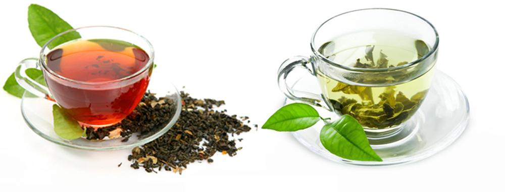 تفاوت چای سبز لاهیجان با چای سیاه