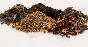 صادرات چای شمال