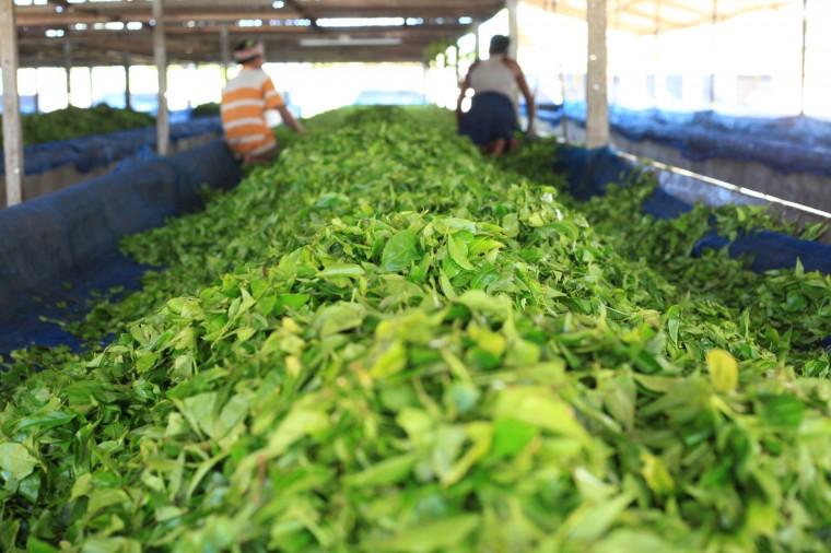 فروش انواع چای ایرانی