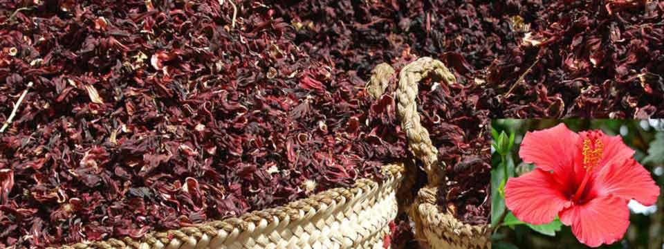 مرکز خرید چای ترش ایران