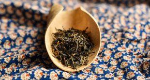 چای اصیل شمال