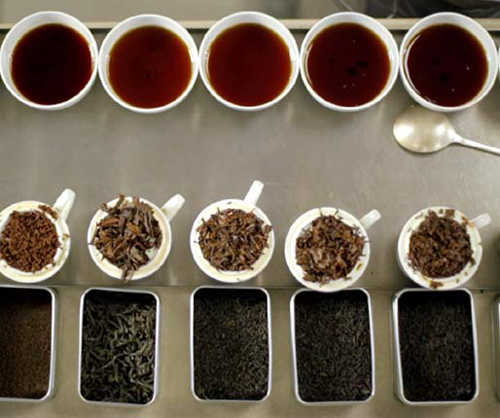 چای سیاه شمال