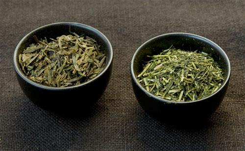خرید بهترین چای سبز برداشت اول بهار