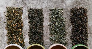 خرید عمده چای بهاره